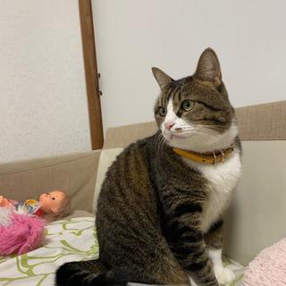 【トライアル中】スリスリ懐っこいデカ猫