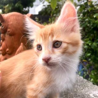 2か月の子猫ちゃんの里親希望