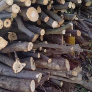 好評でした❗️第二段❗広葉樹の原木❗️薪にどうですか⁉️