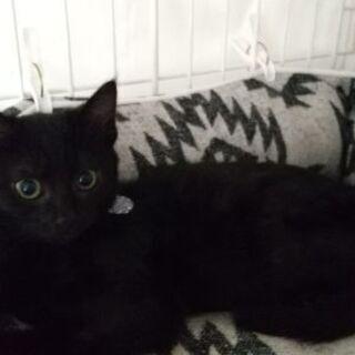 保護猫を迎えよう!生後3ヶ月。No.87くん。