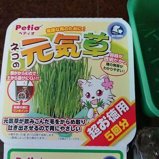 ペティオ 猫の元気草 - 習志野市