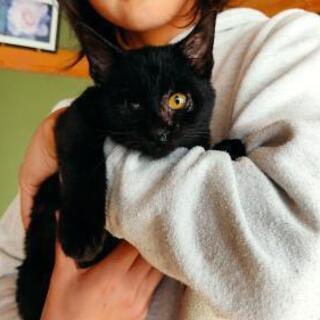 黒猫 3ヶ月 男の子です!