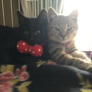 Cute💕な保護猫兄妹(3ヶ月)譲渡予約商談中