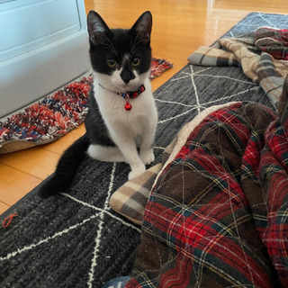 抱っこ大好き5ヶ月猫 急募