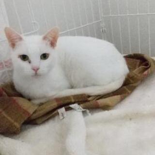 猫白血病陽性です。この子を助けてください。