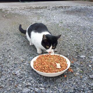 5.6ヶ月の猫ちゃん2匹の里親募集