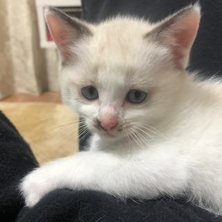 まだ1ヶ月半の子猫です