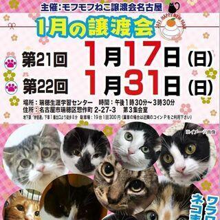 1/17(日) 猫の譲渡会 in 名古屋市瑞穂生涯学習センター