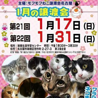 1/31(日) 猫の譲渡会 in 名古屋市瑞穂生涯学習センター