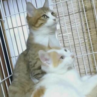 【交渉中】2匹の猫ちゃんの里親さん募集