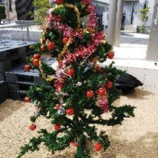 150cmChristmasツリー