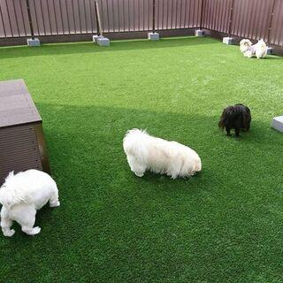 ご自宅にドッグランを作りたい方!人工芝をお勧めいたします!