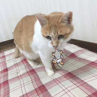 人慣れしてるマリンちゃん - 猫