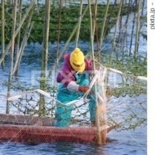 海苔養殖補助業務