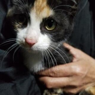 子猫2匹と野良の保護猫の里親を探してます!