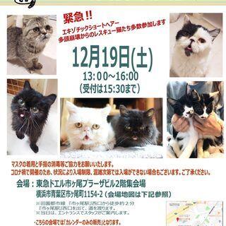 12月19日(土)おーあみ避難所譲渡会in市ヶ尾