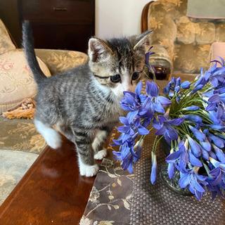 生後2ヶ月半の子猫🐱里親募集
