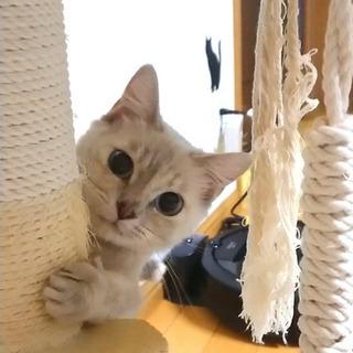 美形シナモンちゃん