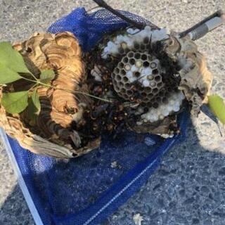 見積もり無料 #蜂の巣駆除 #便利屋作業、営繕作業もお気軽にお問...