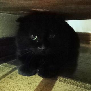 ★里親様✨募集致します★垂れ耳黒猫さん