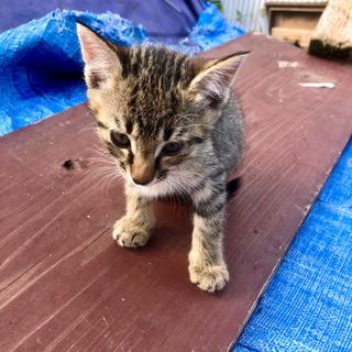 2か月くらいの子猫ちゃん