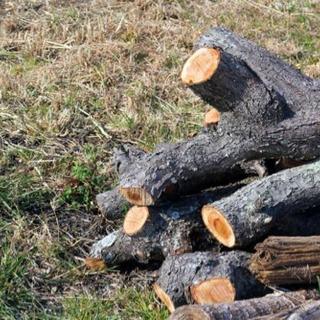 管理が手間になった庭木を格安で伐採します