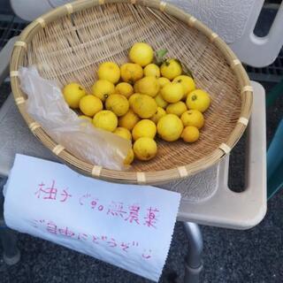 【ネット決済】柚子!無料です!