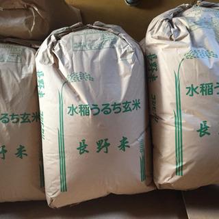 令和2年 コシヒカリ   30キロ玄米