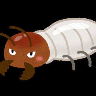 白蟻駆除・害虫駆除・スズメバチ駆除