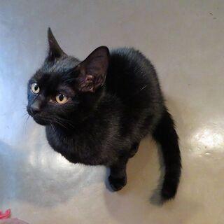 保護猫♡しっぽが長い♪ 黒ネコちゃん 元気いっぱい!