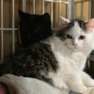 突然なついてきたメス猫ちゃんが子供を産んでいて急遽保護しました ...