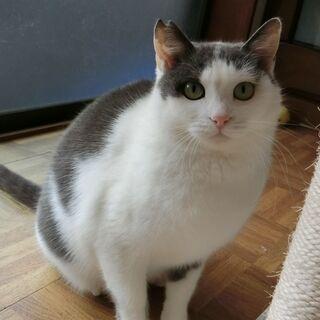 白クレーの美猫です。