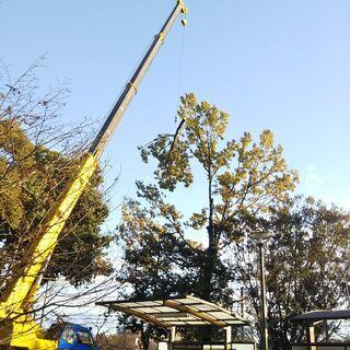 🌸雨水 樹木⚠️伐採お引き受けします。
