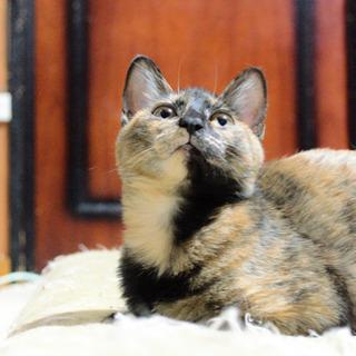 ベタ慣れのサビ子猫 - 猫