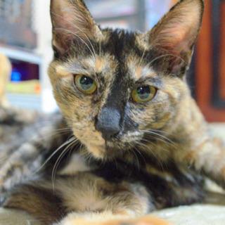 ベタ慣れのサビ子猫 − 北海道
