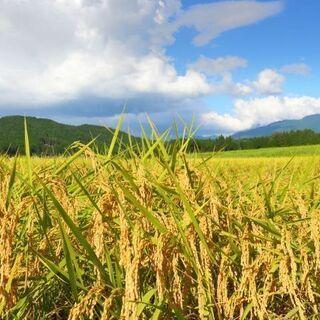 \北海道まで旅費支給/北海道の広大な牧場で牛さんとオシゴト!人混...
