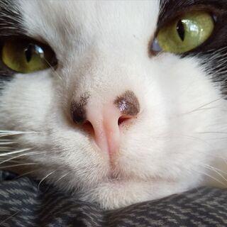 猫の専門家のお墨付き!