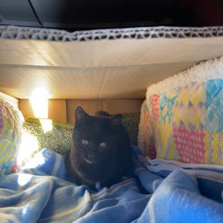 9月中頃生まれの黒猫