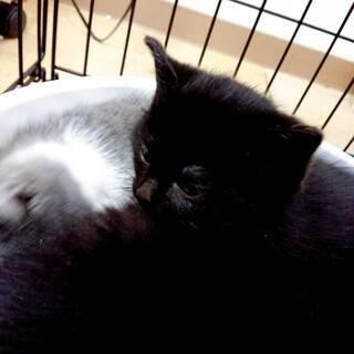 もうすぐ2ヶ月になる子猫が1匹います。