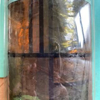 ガラス用装飾シート リアルステンド - 広島市