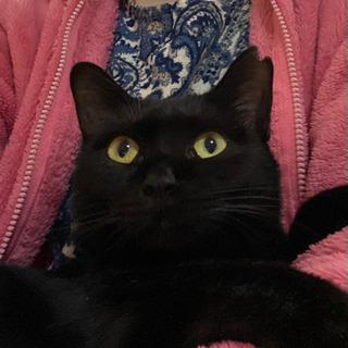 幸せを呼ぶ黒猫の女の子です - 猫