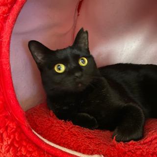 幸せを呼ぶ黒猫の女の子です − 愛知県