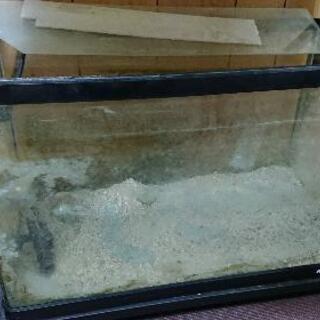 NISSO60センチ規格水槽の画像