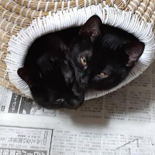 一時、募集を停止致します🙇   黒ちゃんの兄妹💕 4ヶ月位 どな...