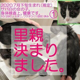 【里親決定】2020年9月生の子猫×4