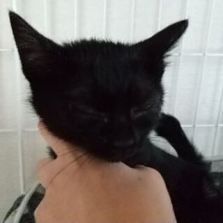 保護猫を迎えよう!生後3ヶ月。No.93くん!