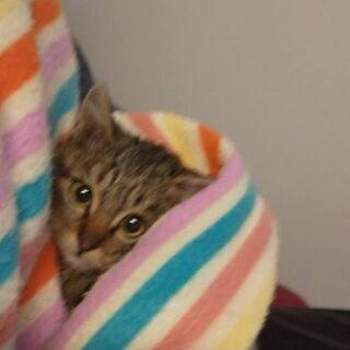 生後2~3ヶ月位の子猫(12/24投稿の兄弟)
