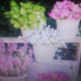 (東京)鉢植え処分/観葉植物(木・花・盆栽)/植木鉢/土の…