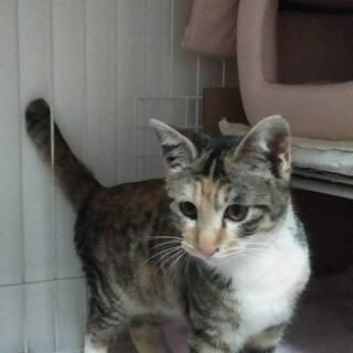 美猫3ヶ月半