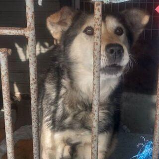 犬(シロ 雑種12才)の里親募集